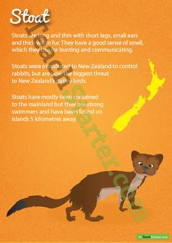 Stoat – New Zealand Animal Poster