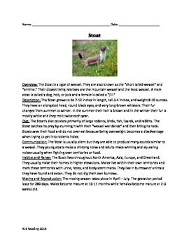 Stoat - Weasel - Review Article Information Facts Questions Vocab Word Search