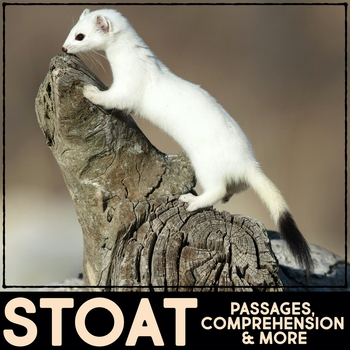 Stoat or Ermine Informational Article, QR Code Research & Fact Sort