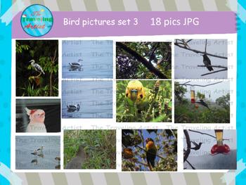 Stock Bird Photographs Set 3