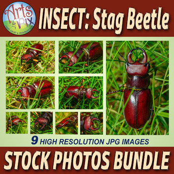 Stock Photo BUNDLE - INSECT- Stag BEETLE - walking in grass - Macro