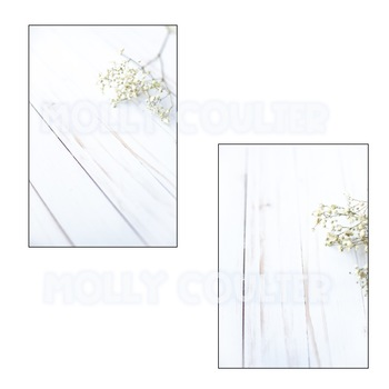 Stock Photo: Baby's Breath-Personal & Commercial Use