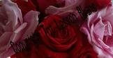 Stock Photo - Background of Roses