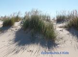 Stock Photo Beach Grass
