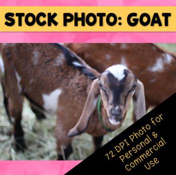 Brown Farm Goat Stock Photo