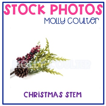 Stock Photo: Christmas Pinecone Stem-Personal & Commercial Use