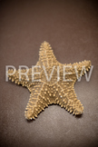 Stock Photo: Echinoderm: Starfish -Personal & Commercial Use