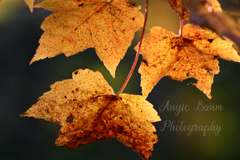 Stock Photo Fall Leaves 1