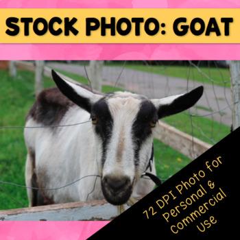 Farm Goat Stock Photo