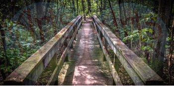 Stock Photo - Forest Foot Bridge - Photograph - Arts & Pix - Bridge
