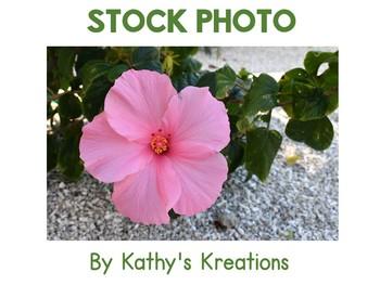 Stock Photo: Hibiscus Pink