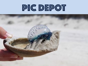 Stock Photo Nature Jellyfish