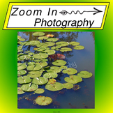 Stock Photo: Lilypads Background
