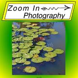 Stock Photo: Lilypads Background