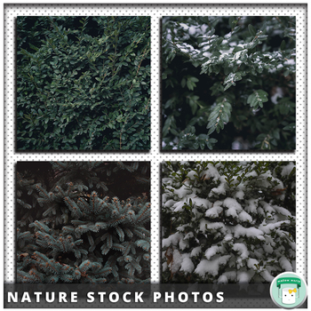 Stock Photo Moody Nature Collection