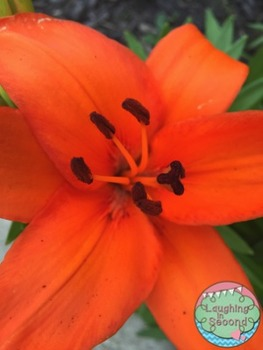 Stock Photo - Orange Flower