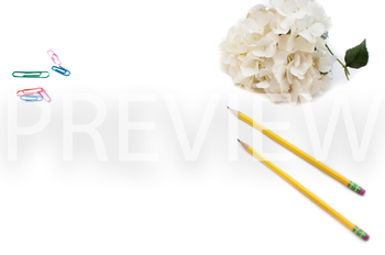 Stock Photo: Pencil, Paperclips & Flowers -Personal & Commercial Use