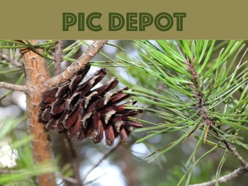 Stock Photo Pine Cone Nature