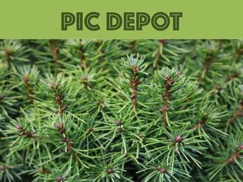 Stock Photo Pine Needles Background
