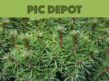 Stock Photo Pine Needles Background