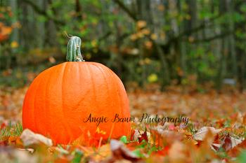 Stock Photo Pumpkin 1