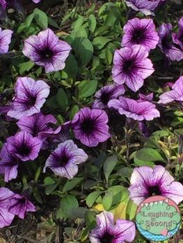 Stock Photo - Purple Flowers