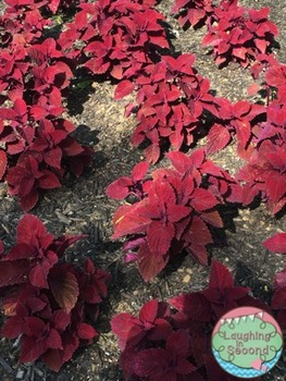 Stock Photo - Red Plants in Flowerbed