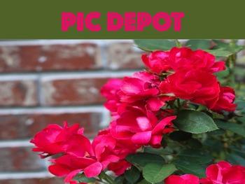 Stock Photo Roses Nature