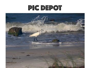 Stock Photo Shoreline Bird Nature