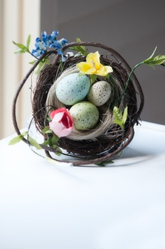 Stock Photo: Birds Nest -Personal & Commercial Use