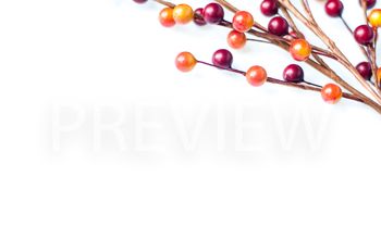 FREEBIE! Stock Photo: Fall Berries #3 -Personal & Commercial Use