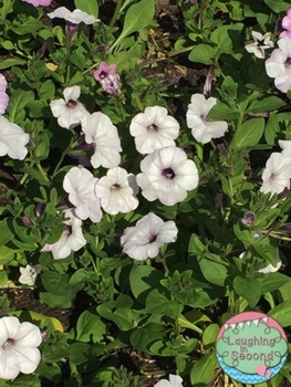Stock Photo - White Flowers