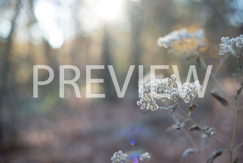 Stock Photo: White Flowers -Personal & Commercial Use