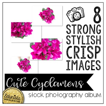 Stock Photography Membership Cute Cyclamens Album by Edunista