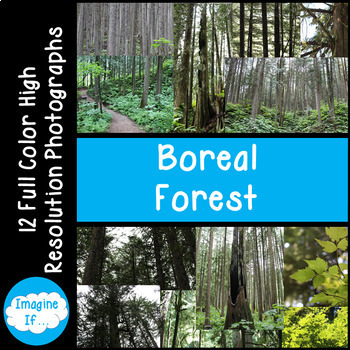 Stock Photos-Boreal Forest