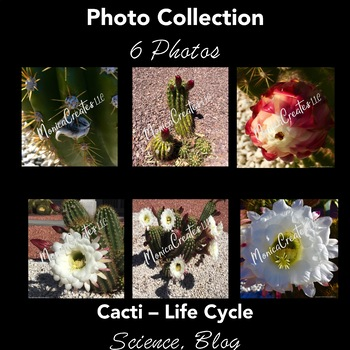 Life Cycle: Photos. Cactus Bud to Flower: