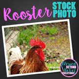 Chicken Stock Photo ◆ Rooster Stock Image ◆ Chicken Photograph