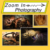 Stock Photos: Dinosaur Mini Bundle