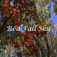 Stock Photos - Fall Leaves - 4 Photographs