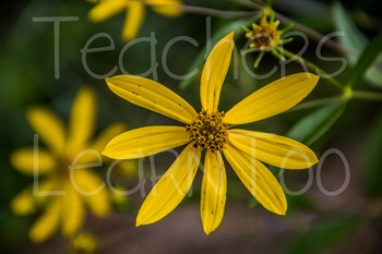 Stock Photos - Flower #1