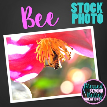 Flower and Bee Stock Photo ◆ Flower and Bee Stock Image ◆ Bee Photograph