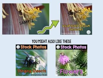 Stock Photos Freebie