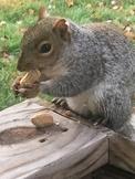 Stock Photos - Squirrel Fun - OK for Commercial Use!