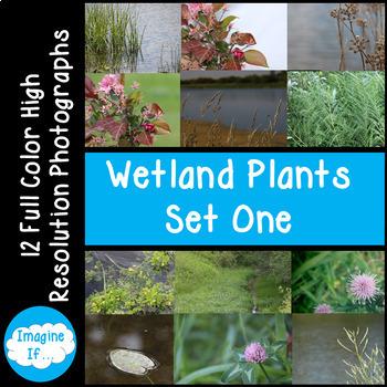 Stock Photos-Wetland Plants Set 1