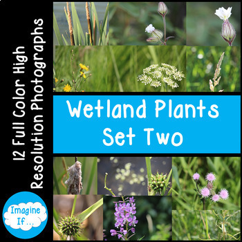 Stock Photos-Wetland Plants Set 2