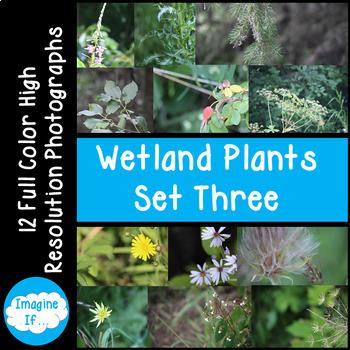 Stock Photos-Wetland Plants