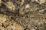 Stock Photos - Wood Grain / Trees #2