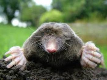 Stoichiometry - The Mole Unit Plan - 15 Day Unit Planner!!!