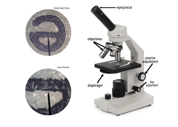 "StoryLab - Microscope and the Letter ""E""  Answer Key"