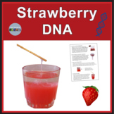 Strawberry DNA Extraction